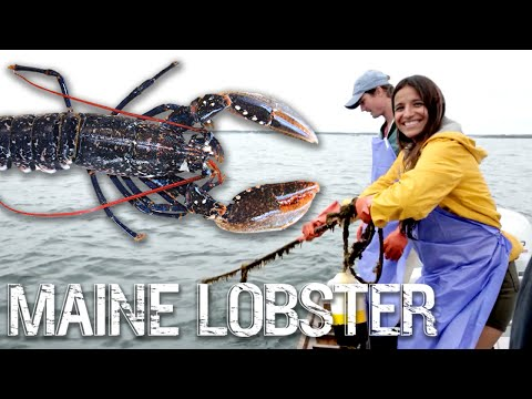 Lobster hunting in maine - foodways with jessica sanchez, episode 2